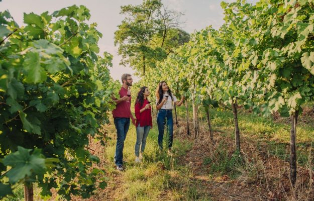 """The Draghi government focuses on wine tourism to restart Italy: """"now a strategic plan"""""""
