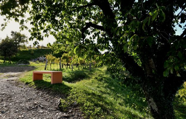 "Seven benches, one for each cellar, with a ""view"" of Oslavia: the idea of ​​the producers of Ribolla"