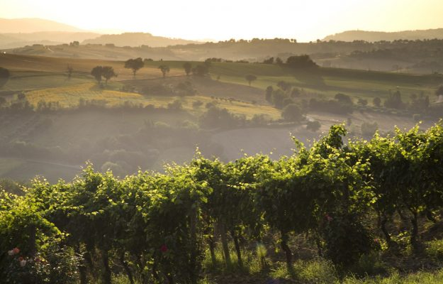 In Italy, a quarter of the world's organic vineyards, but there is still no data bank for the sector