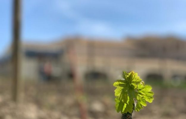 """Confagricoltura: """"extend the expiry of the authorizations for planting vineyards"""""""