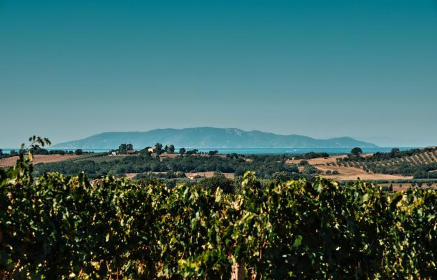 The revolving pledge becomes a reality also for Morellino di Scansano: agreement with Crédit Agricole
