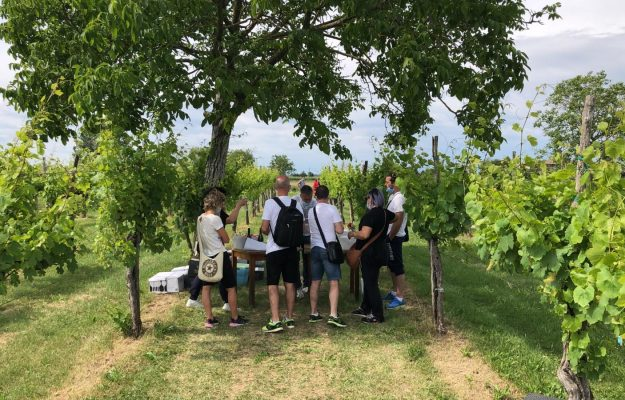 Wine tourism starts from the vineyard, and from the Friuli Venezia Giulia Wine Tourism Movement