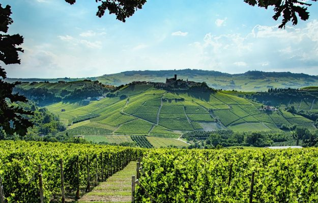 Illy, the arrival in the Langhe and Barolo is among the objectives, but it is not imminent