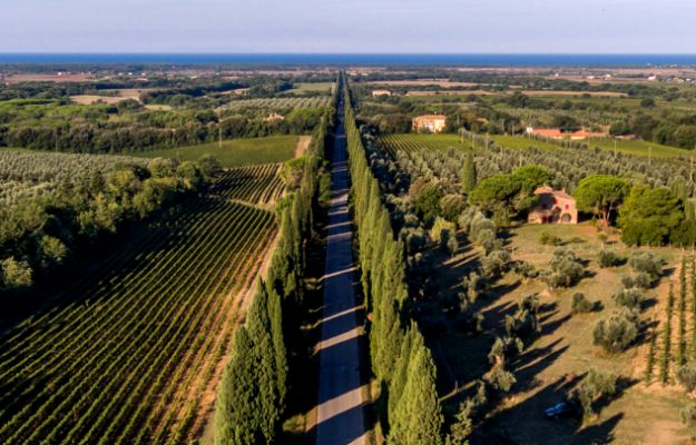 """Bolgheri, one of the most """"precious"""" wine denominations on the shelves of Italy and the world"""