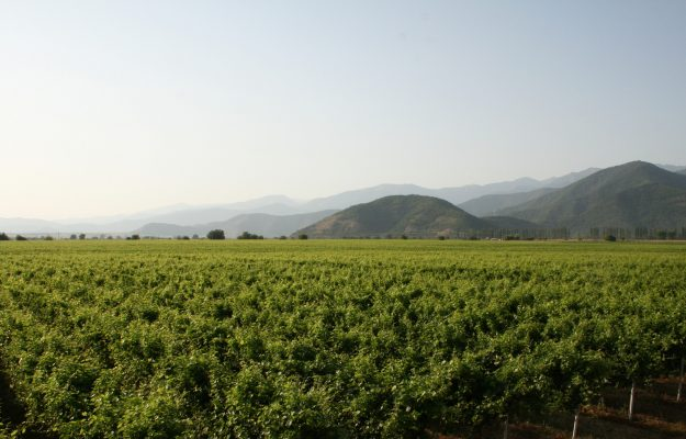 DNA sequencing of Mgaloblishvili to steal the secrets of the Georgian grape