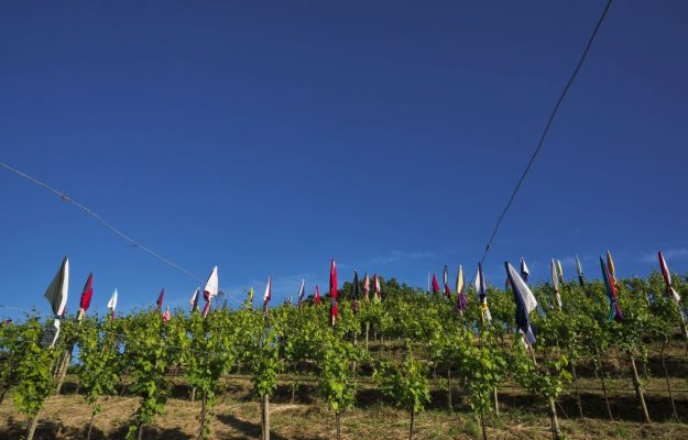"""Umbrellas in the rows?  Here is """"La Plage"""", installation by Pascale Marthine Tayou in the Pusterla vineyard"""