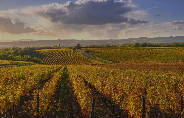 """Wine and acquisitions, """"Vineyards"""" was born, to assist companies in the evaluation and steps"""