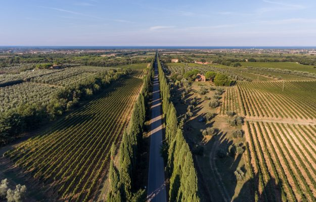 """Bolgheri unveils the 2019 vintage """"en primeur"""", and brings """"Tuscany"""" to the label"""