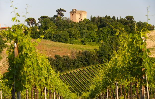 Wine, history, architecture, landscape: the Romagna of wine tells its souls to the world
