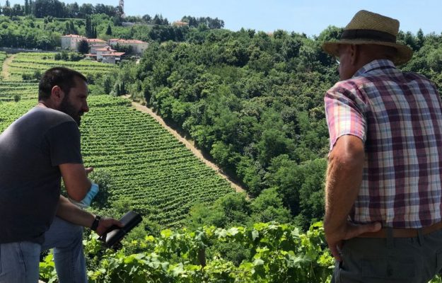 Trees return to shade the vineyards, in the name of biodiversity: the words of Stefano Lorenzi