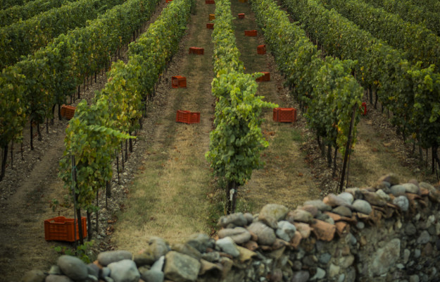 Territories in harvest, to kick off is Franciacorta, an icon of Italian sparkling wine